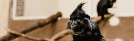 panoramic shot of black monkey in zoo Stock Photo - 134657470