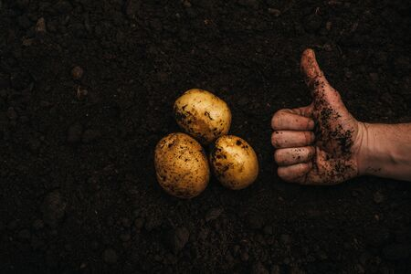 cropped view of farmer showing thumb up near ripe natural potatoes in ground Stok Fotoğraf