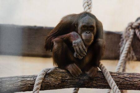 cute monkey sitting near ropes on tree