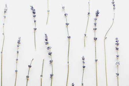 top view of dry lavender twigs with flowers isolated on white 写真素材