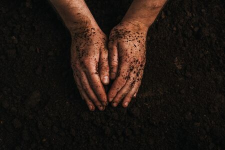 partial view of dirty farmer hands on ground Stok Fotoğraf