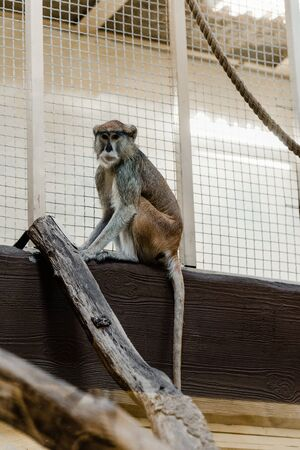 selective focus of cute monkey sitting near cage Stock Photo - 135123174
