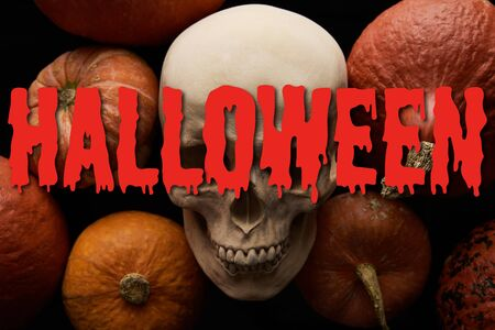 pumpkins and skull on black background with bloody Halloween illustration