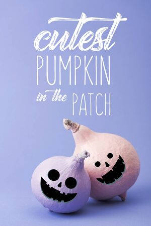 pastel colorful painted pumpkins on violet background with cutest pumpkin in the patch illustration