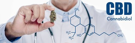 panoramic shot of doctor in white coat holding medical marijuana bud isolated on white with cbd molecule illustration