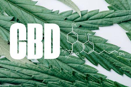 close up view of medical marijuana leaf on white background with cbd molecule illustration 版權商用圖片