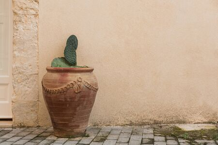 green cactus with spikes in flowerpot near wall Stock Photo