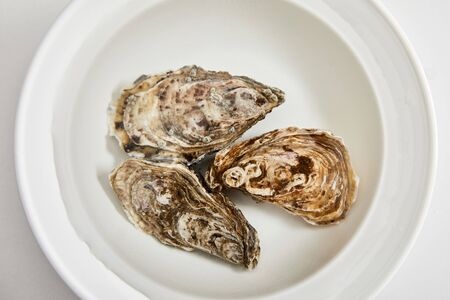 top view of bowl with water and oysters isolated on white Zdjęcie Seryjne
