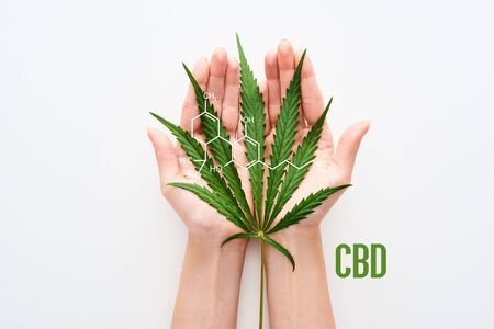 cropped view of woman holding marijuana leaf on white background with cbd molecule illustration