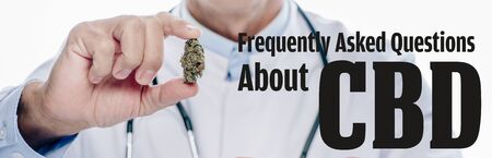 panoramic shot of doctor in white coat holding medical marijuana bud isolated on white with frequently asked questions about cbd illustration
