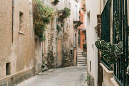 selective focus of green cactus near narrow street in ragusa, italy