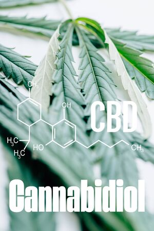 close up view of medical marijuana leaf on white background with cbd molecule illustration Banque d'images - 134913447