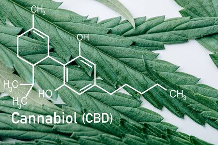 close up view of medical marijuana leaf on white background with cbd molecule illustration Banque d'images - 134915240