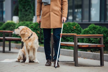 Cropped view of blind man with walking stick and guide dog on urban street