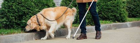 Cropped view of man with walking stick and guide dog on street, panoramic shot