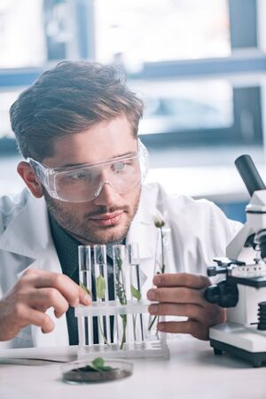 selective focus of bearded biochemist looking a test tubes with green plants near microscope