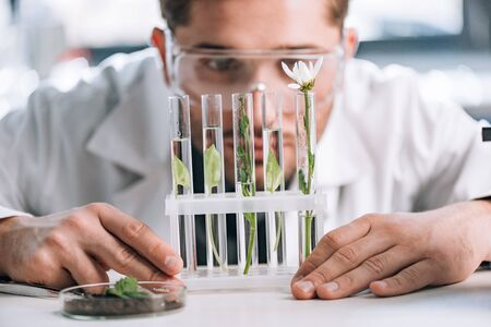 selective focus of bearded biochemist looking a test tubes with small plants near microscope