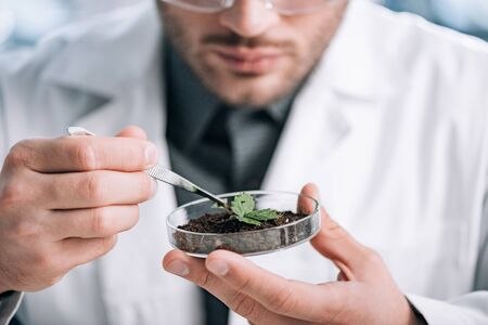 cropped view of biochemist holding glass sample with ground and small plant