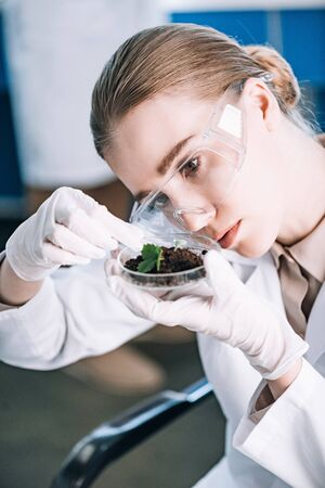 attractive biochemist in goggles looking at green plant