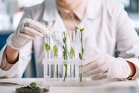 cropped view of biochemist in latex gloves touching test tube with small plant Stock Photo