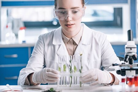selective focus of attractive biochemist in goggles looking a test tubes with small plants near microscope