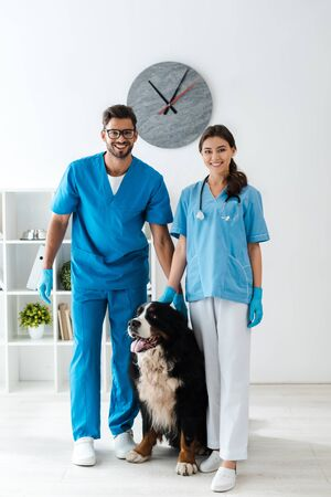 two smiling veterinarians looking at camera while standing near cute bernese mountain dog