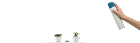 cropped view of woman spraying air freshener near ceramic clean toilet bowl with plants isolated on white, panoramic shot Stock Photo