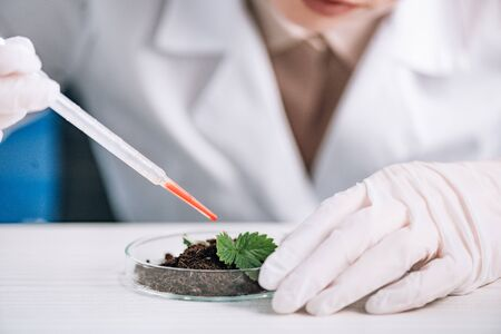 cropped view of biochemist holding pipette near green plant