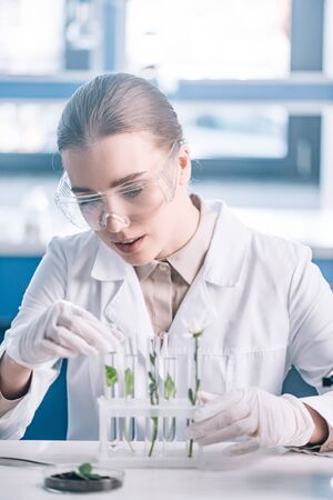 selective focus of beautiful biochemist in goggles looking a test tubes with small plants near microscope