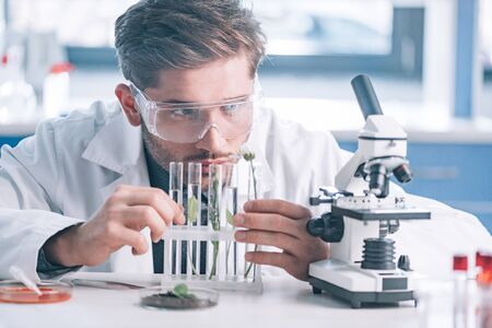 selective focus of handsome biochemist looking a test tubes with green plants near microscope  Stock Photo