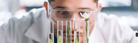 panoramic shot of handsome biochemist looking a test tubes with green plants