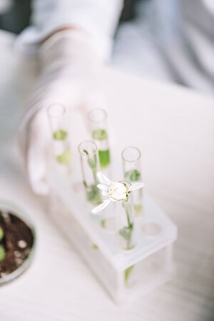 cropped view of biochemist in latex glove near flower and plants in test tubes Stock Photo