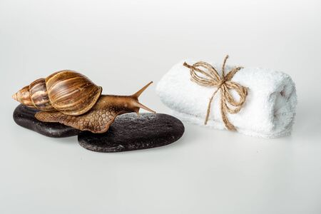 brown snail on spa stones near cotton towel on white background