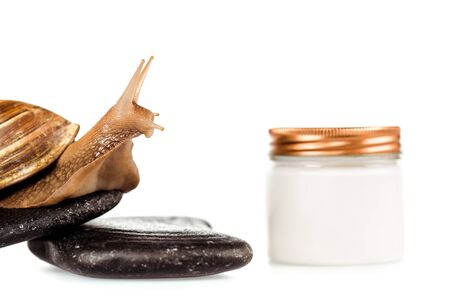 close up view of brown snail on spa stones near cosmetic cream container isolated on white