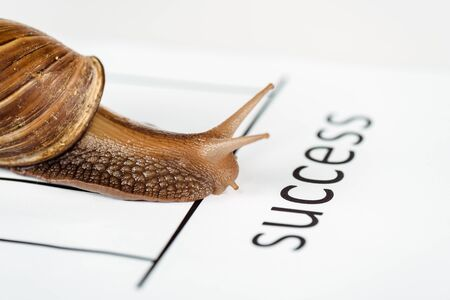 close up view of slimy brown snail on white paper with success lettering isolated on white Stock Photo