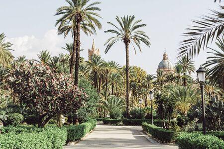 PALERMO, ITALY - OCTOBER 3, 2019: green palm trees in garden villa bonanno near cattedrale di palermo Standard-Bild - 136572295