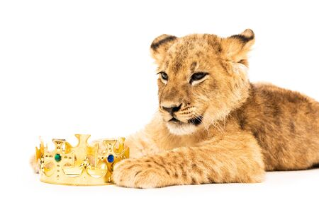 cute lion cub near golden crown isolated on white 写真素材