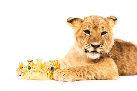 cute lion cub near golden crown isolated on white 版權商用圖片