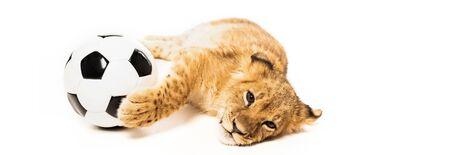cute lion cub near soccer ball isolated on white, panoramic shot Reklamní fotografie