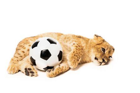 cute lion cub near soccer ball isolated on white