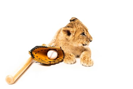 cute lion cub near baseball equipment isolated on white
