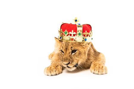 cute lion cub in golden and red crown isolated on white Zdjęcie Seryjne