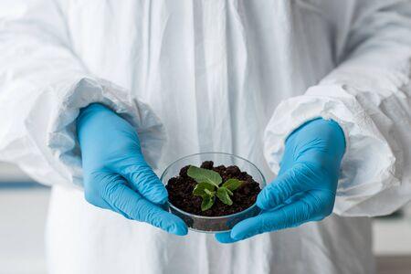Ausgeschnittene Ansicht eines Biologen in Latexhandschuhen, der Blätter im Labor hält
