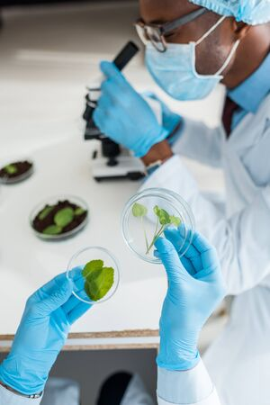 selective focus of biologist holding leaves and african american colleague using microscope