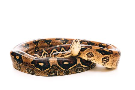 Close up view of python on white background