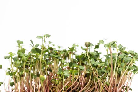 Microgreens with green leaves isolated on white Reklamní fotografie