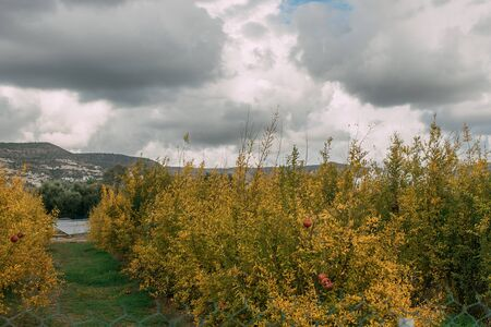 yellow plants and wildflowers against grey and cloudy sky