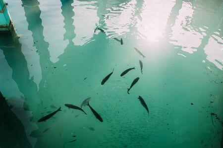 top view of fish swimming in blue mediterranean sea