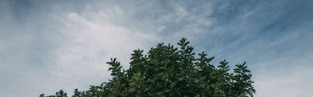 panoramic shot of green leaves on branches against blue sky