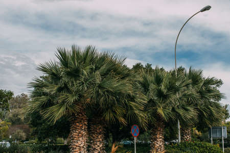 green palm trees near road sign against blue sky with clouds Imagens